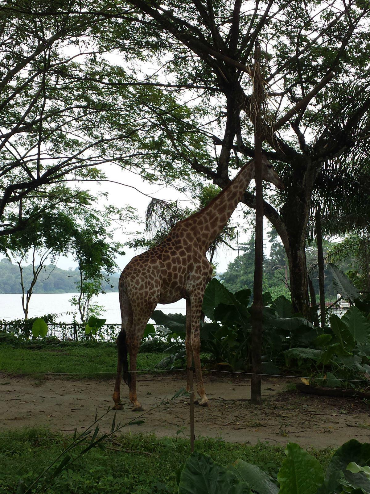 新加坡动物园 夜间野生动物园是世界上第一个专为夜间活动的动物而
