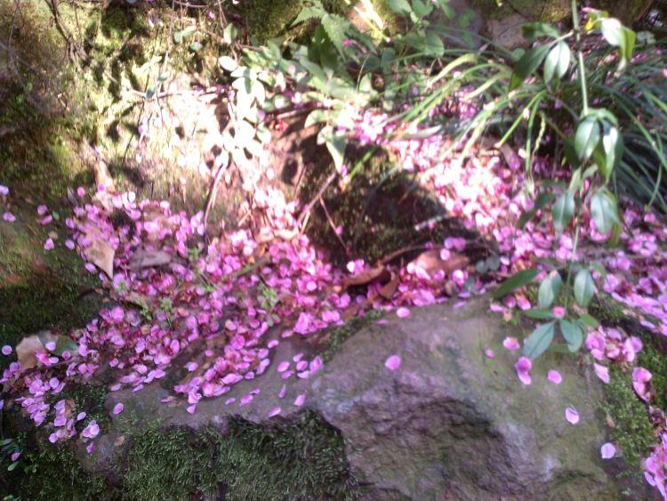 片片梅花花瓣随风飘落,在花坛边,台阶上