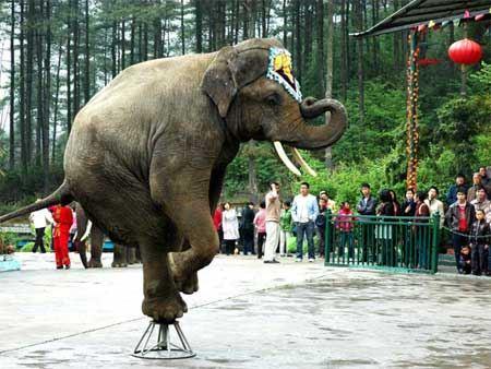 贵阳森林野生动物园位于贵阳市修文县