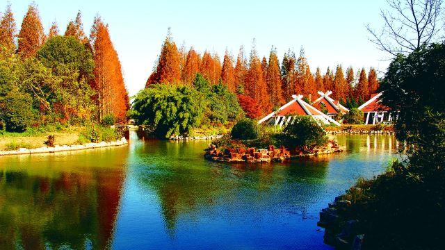 东平国家森林公园门票,崇明东平国家森林公园攻略图片