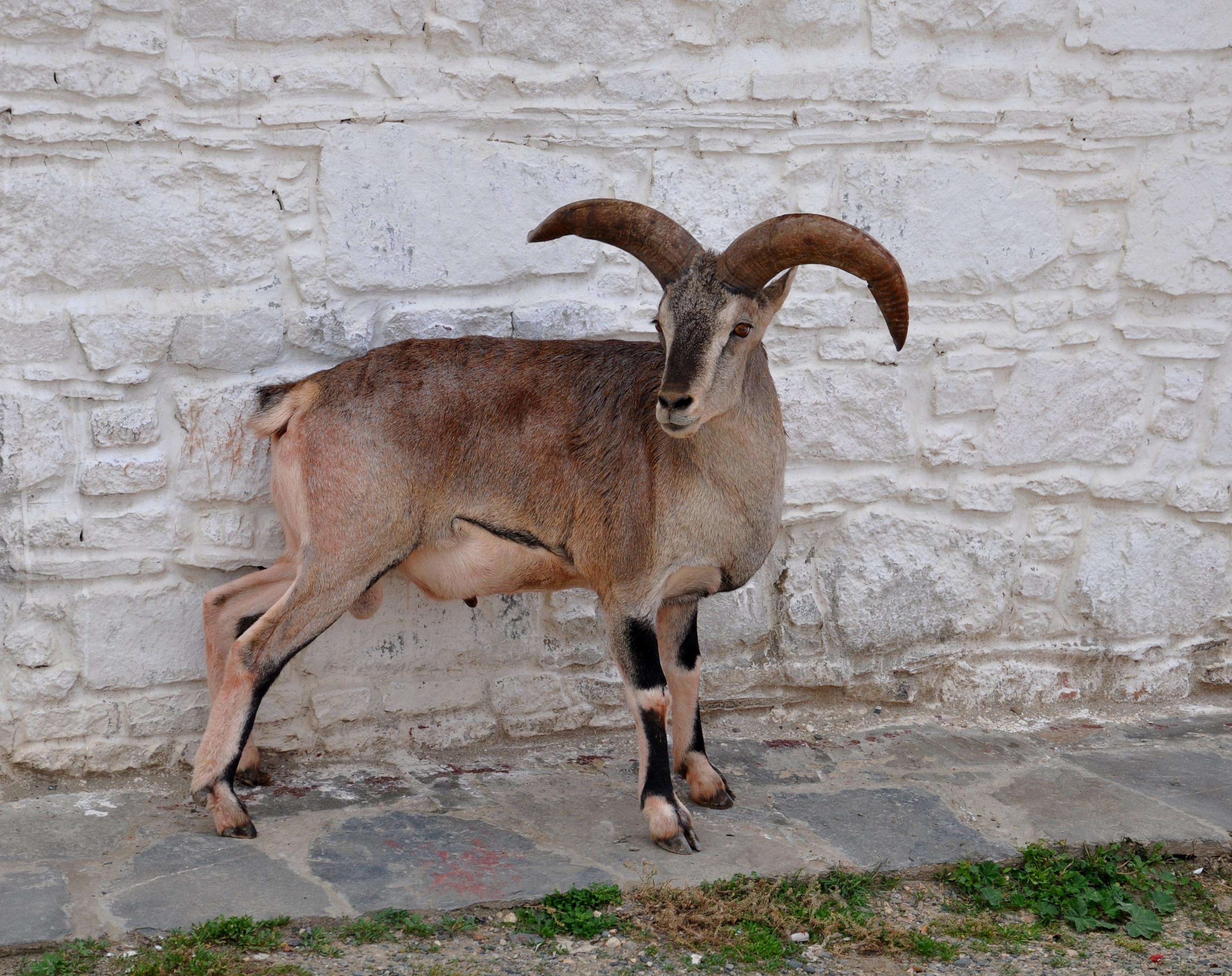 西藏动物头图片