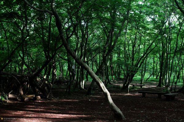 ps高清儿童森林素材