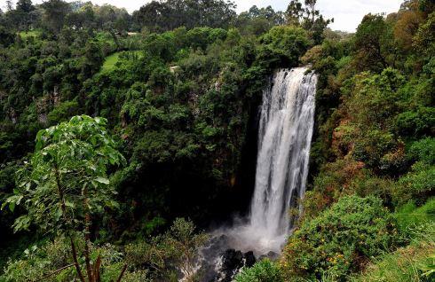 森林山水动物动态图片
