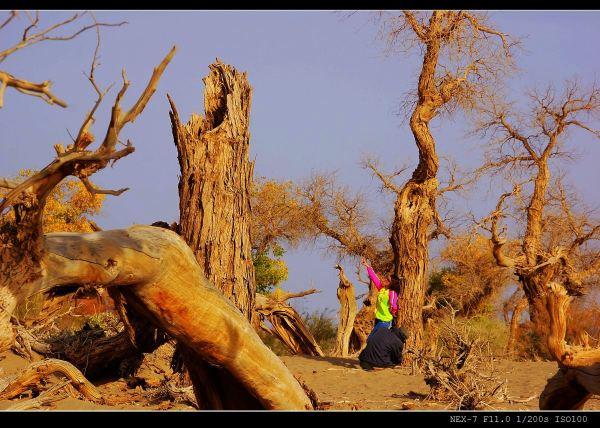 荒漠,蓝天,白云,枯树,残阳构成了怪树林最经典的标志.