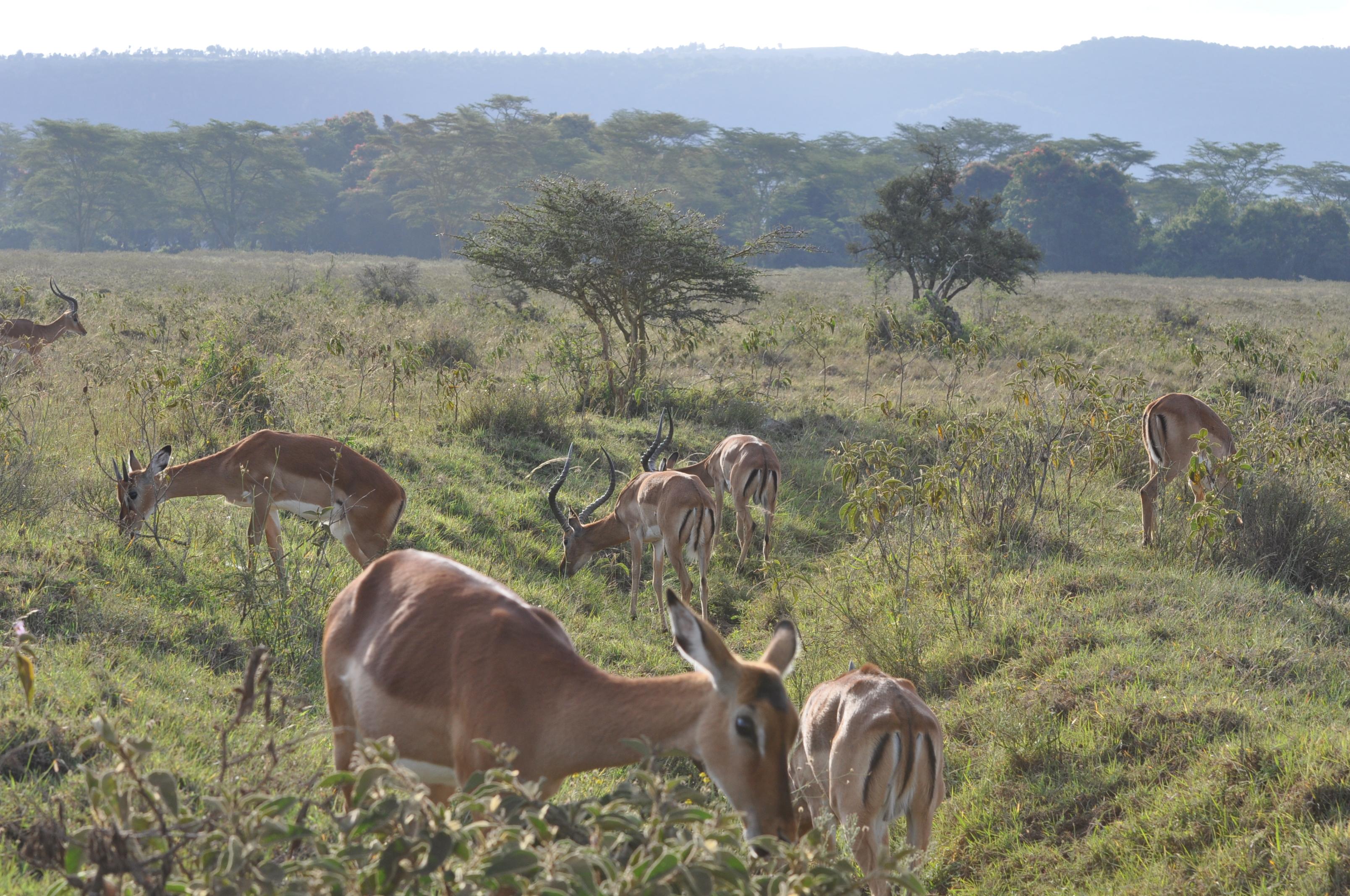 去肯尼亚假装冒充是土豪的正确方式方法