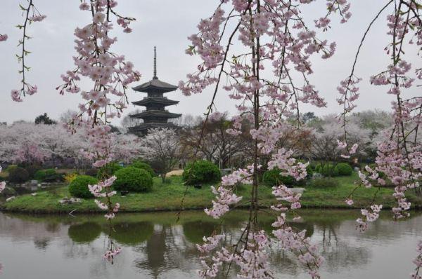 伞状的日式五重塔