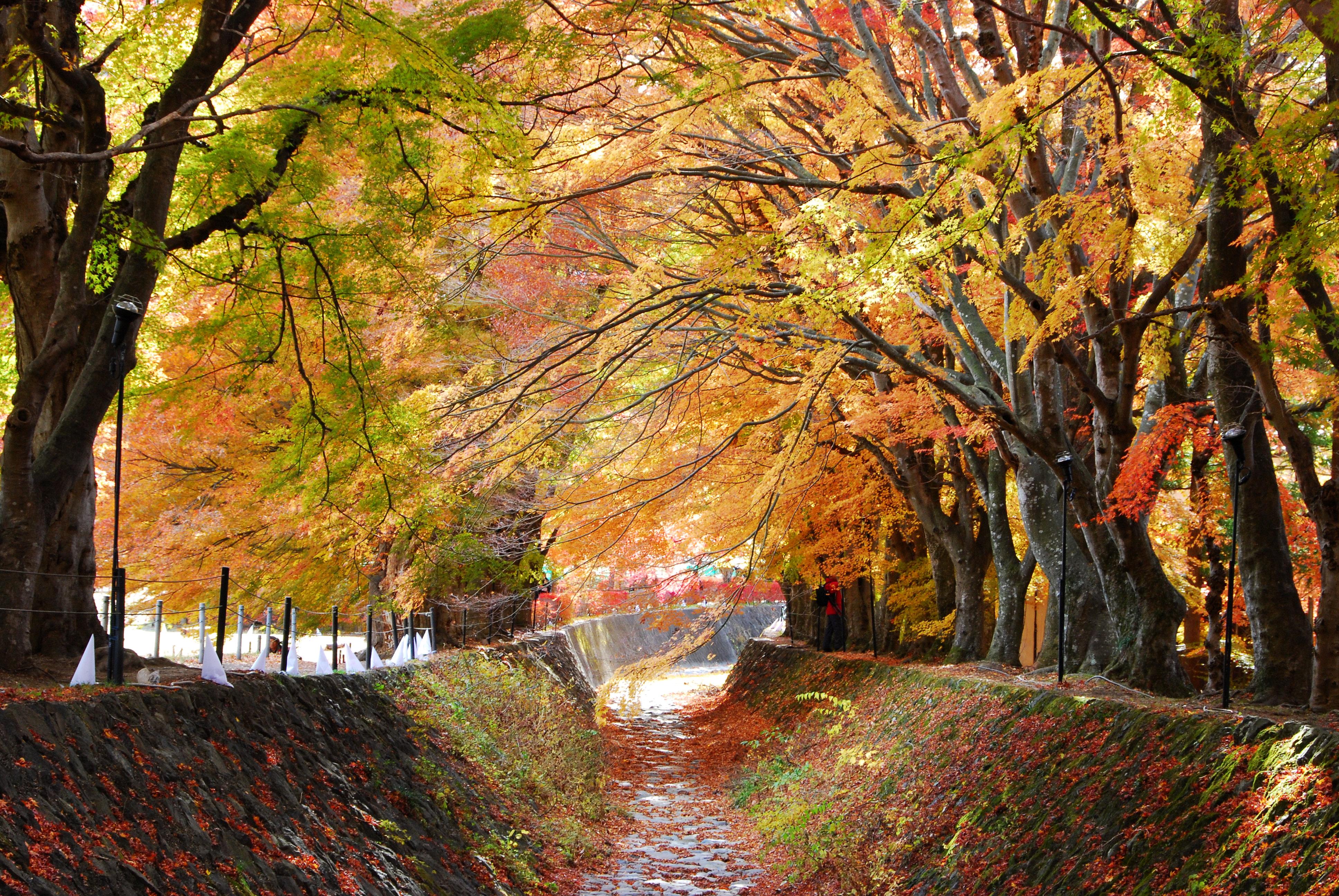 漫步在弯曲的小道上面,两边的枫树交错成荫,满地的落叶,五彩缤纷会让