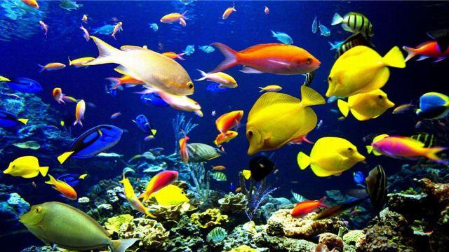 用超轻土制作海底动物