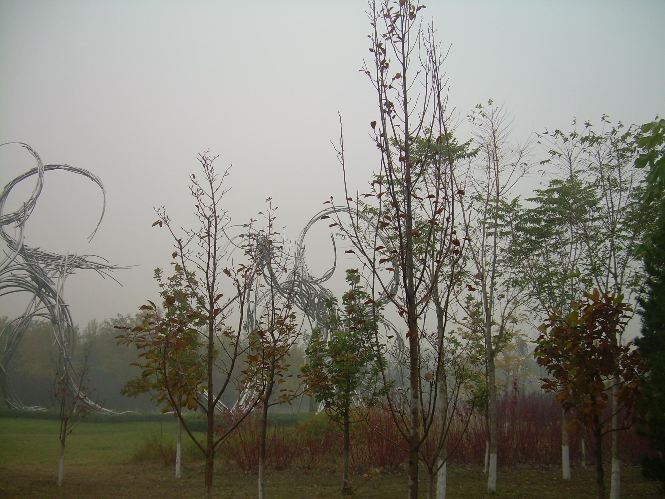 除了金黄的银杏,杨树,梧桐树的叶子都由碧绿变成了斑斓的色彩.