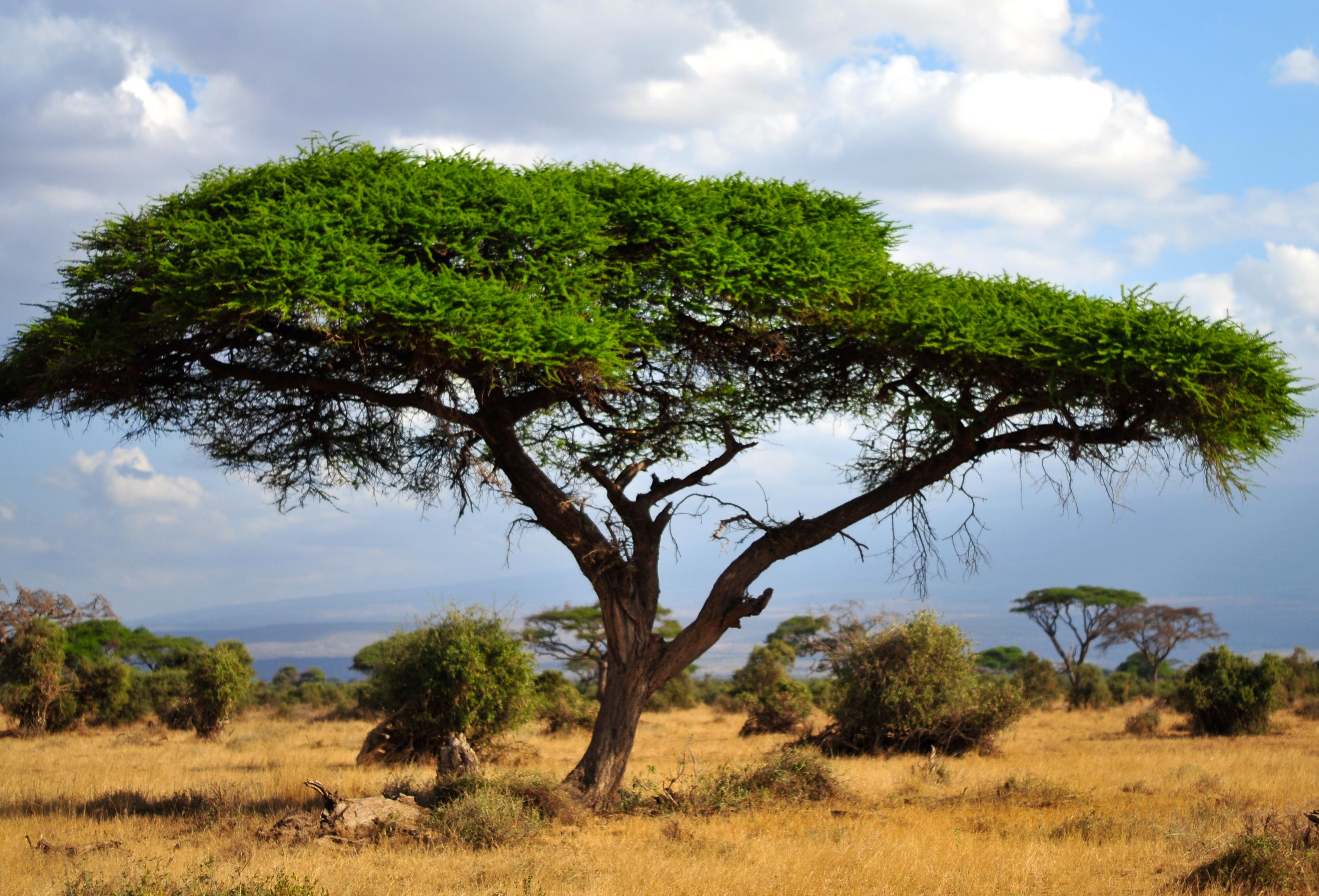 000亩的原野是野生动物保护区