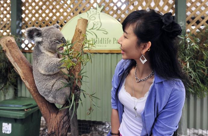 抱着考拉的女馆员,真漂亮~ 天天和这样可爱的动物在一起,肯定心情愉快