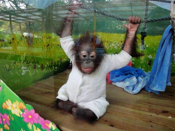 长隆有好几个主题活动场,因为孩子小所以我选择的是野生动物园和马戏.