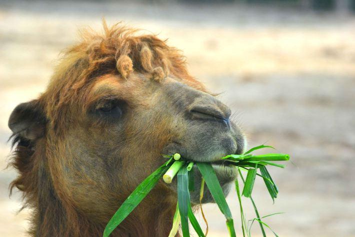 上野一日游の千奇百怪的动物世界