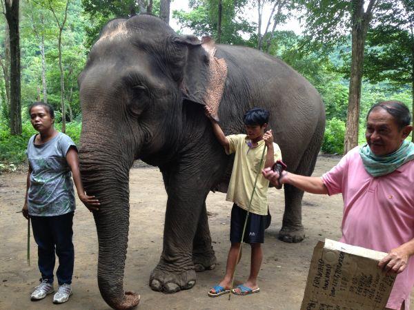 建议不要穿拖鞋,走山路不方便.骑着大象会掉下来.