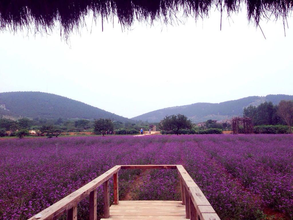 旅行摄影大展#紫海蓝山,花花世界