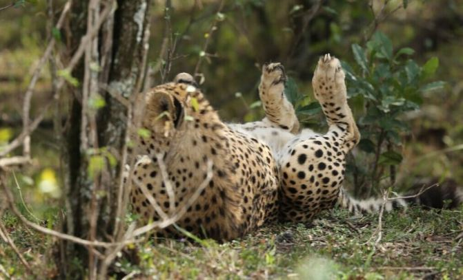 非洲肯尼亚狂野动物大迁徙10天跟团自驾摄影之旅