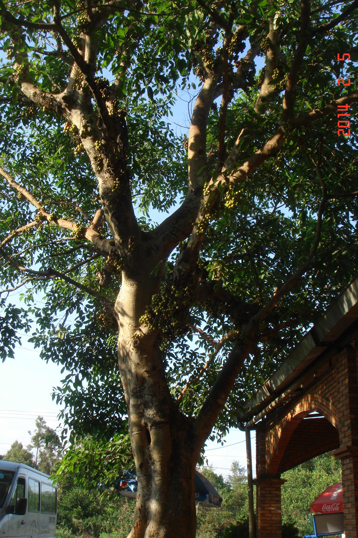 越南都生长什么树木