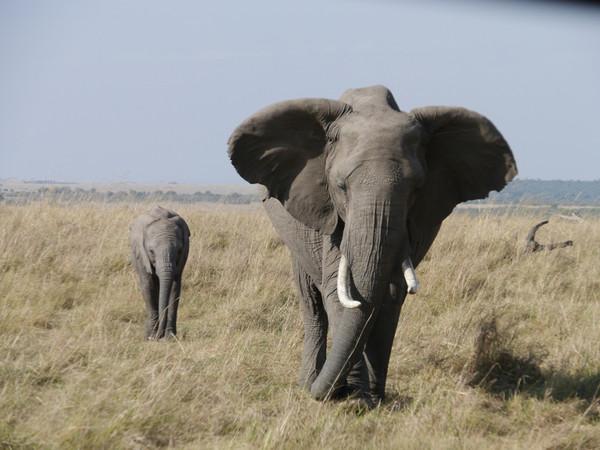 非洲观赏动物大迁徙