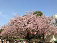 代代木公园-东京-M33****0868