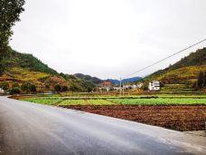 芹川村-千岛湖-110****587
