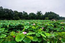 武汉植物园-武汉-M29****5227