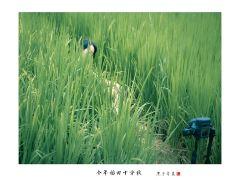 4日桂林+阳朔+龙胜