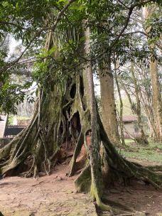 Aburi Botanical Gardens-阿克拉-ctyangt