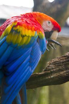 吉隆坡飞禽公园-吉隆坡