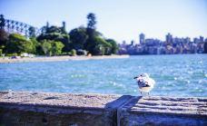 麦考利夫人座椅-悉尼-zhulei831230