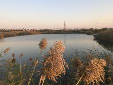 少海湿地公园-胶州-L_o_