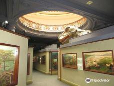 Natural Science Museum-德班