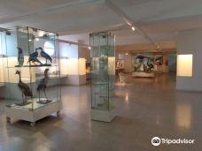 Museo de Ciencias Naturales y Antropológicas Juan Cornelio Moyano-门多萨