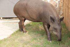 南美貘展区-南通-AIian