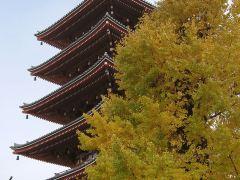东京古寺神社巡礼1日游