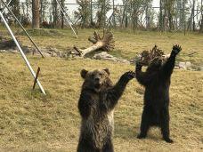 西伯利亚棕熊展区-南通-AIian