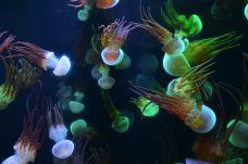 九丰海底世界-铜仁-AIian