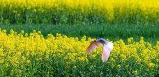 朱鹮自然保护区-洋县-勇猛十温柔