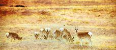可可西里藏羚羊观景台-玉树-doris圈圈