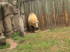 林肯公园动物园-芝加哥-135****2356