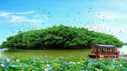 榕树 荷花 船