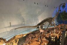 恐龙博物馆-胜山市-珍珍吖头