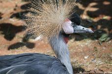 National Zoological Gardens of South Africa-比勒陀利亚