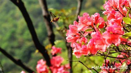 桐柏山淮源风景区 (5)