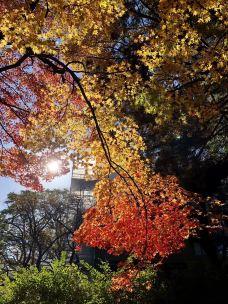代代木公园-东京-东张西望望东西