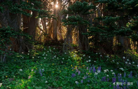 西雅圖雷尼爾山國家公園一日遊(可免費送機丨中文導遊丨西雅圖往返)