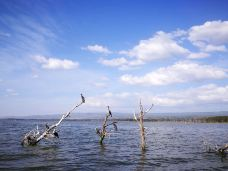 奈瓦沙湖-纳库鲁-pxy0705