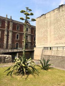 大神庙-墨西哥城-翱翔的大鲨鱼