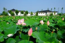 荷仙子风景区-日照-AIian