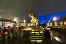 恐龙博物馆-胜山市-C-IMAGE