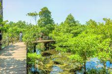 考帕邦刊自然保护区-甲米-doris圈圈